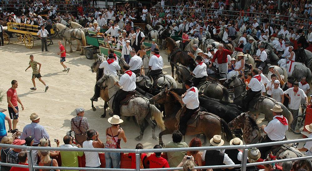 Les calèches arrivant dans les arènes de Saint-Laurent d'Aigouze le jour de la fête à l'ancienne