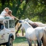 camargue-autrem-chevaux